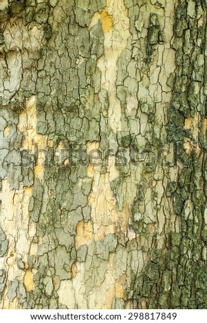 Dry cracked tree bark texture closeup - stock photo