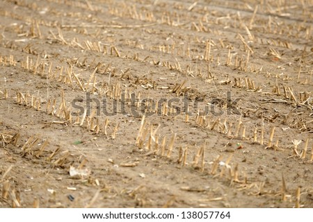 Dry cultivated land with dead plants and soil