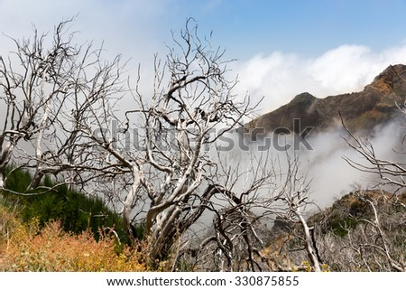 Dry dead trees in foggy mountains, Madeira - stock photo