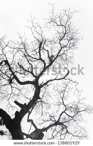 Dry dead twigs isolated - stock photo