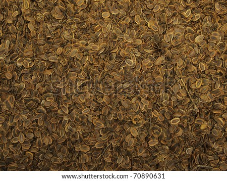 Dry dill seeds texture background pattern