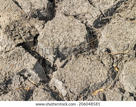 Dry earth with dried leaves and twigs in the cracks, close up. Large clumps of cracked dirt. Drought or global warming concept.   - stock photo
