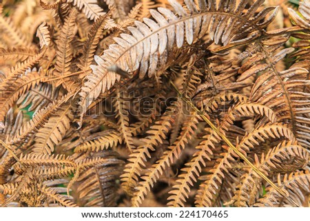 Dry fern leaf in nature - stock photo