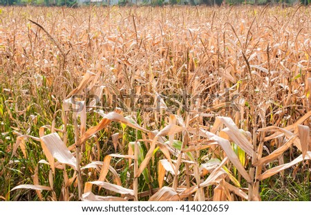 Dry field and mountains background. - stock photo