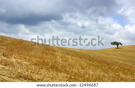 Dry field in alentejo with tree. - stock photo