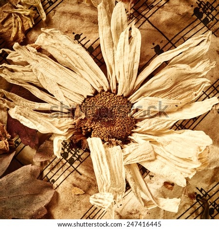Dry flower on vintage paper background - stock photo