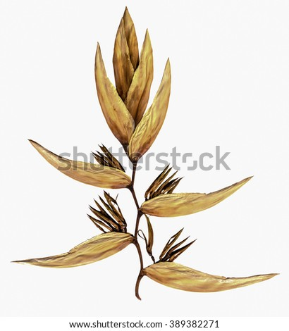 Dry flower with isolated background