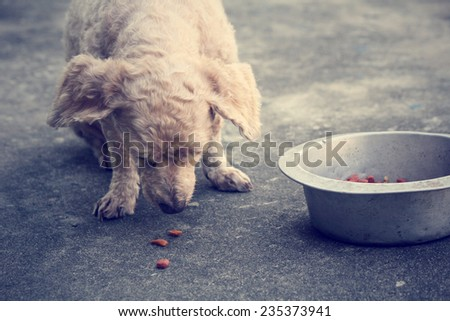 Dry food and the dog - stock photo