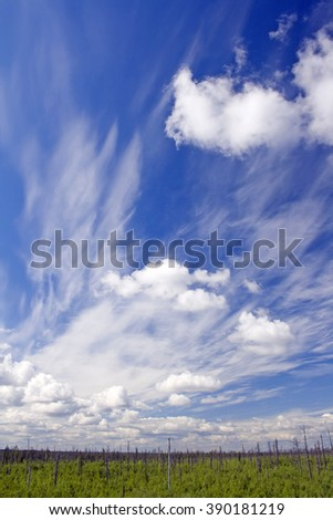 Dry forest and blue sky - stock photo