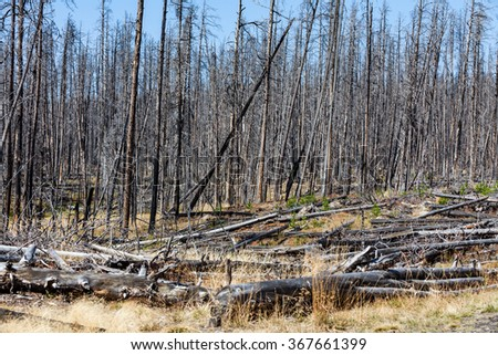 Dry forest in Yellowstone National Park, Wyoming - stock photo