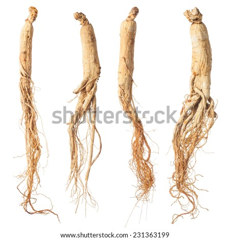 dry ginseng roots isolated on white - stock photo