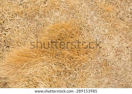 dry grass - stock photo