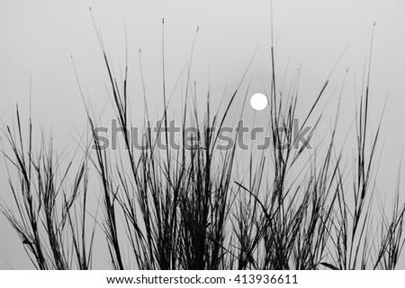 Dry grass and sky in dark toned wallpaper. Grass silhouette. - stock photo