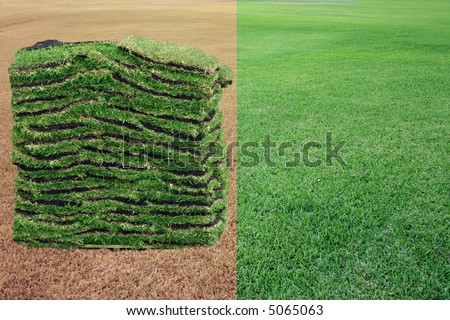 """Dry grass, green grass. Sod for landscaping the lawn - """"before-after"""". - stock photo"""