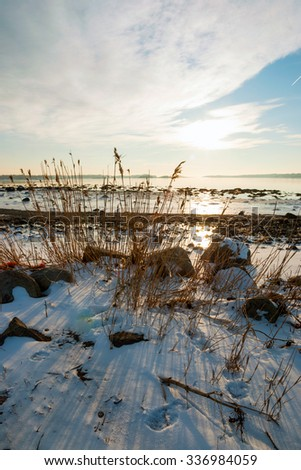 Dry grass in frozen winter fjord sunshine, Norway - stock photo