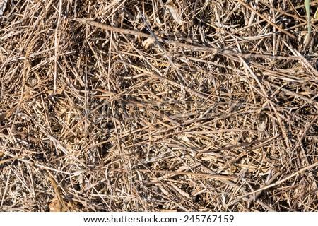 Dry grass texture - stock photo