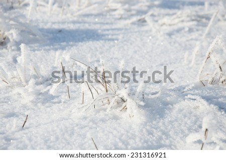 dry grass under the snow  - stock photo