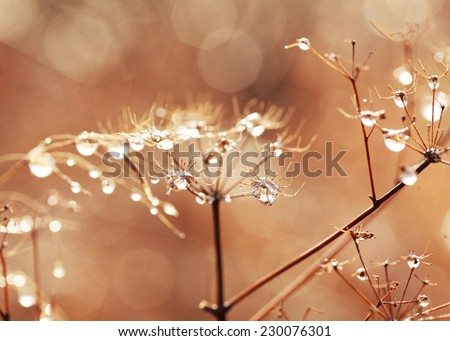 Dry grass with frozen water drops after freezing rain, autumn background, selective focus, toned - stock photo