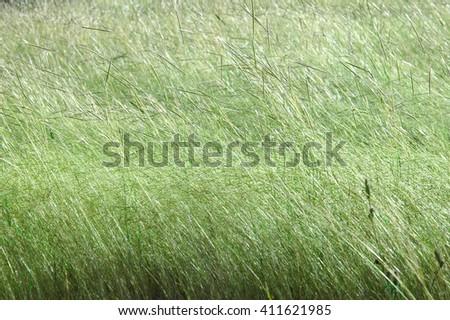 Dry Grassland On Sunny Day - stock photo