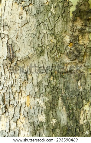 Dry green mossy tree bark texture closeup - stock photo