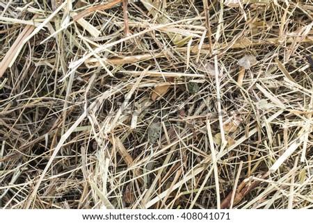 dry hay - stock photo