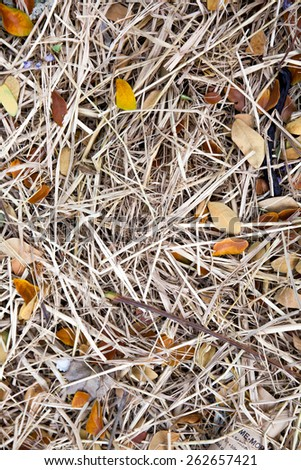 Dry Hay and Leaves for Background - stock photo