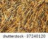Dry hay texture - stock photo