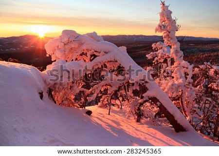 "Dry knocked down tree covered with snow in the pink rays of the rising sun in the background of the forest and mountains, winter morning on the ""Blue Rocks"" pass, South Urals, Russia. - stock photo"