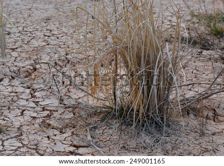 Dry land texture, background image. - stock photo