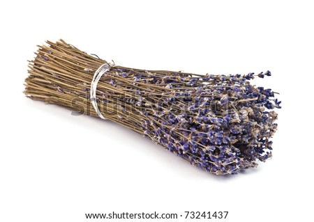dry lavender bunch isolated on white - stock photo