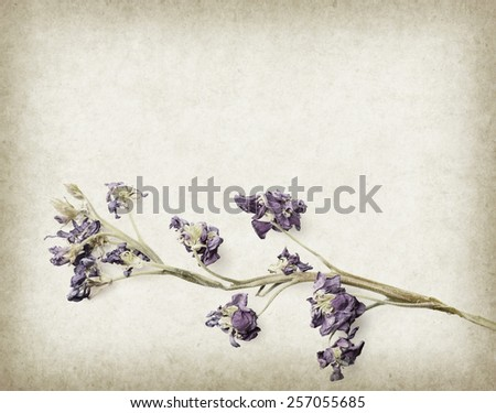 dry lavender on paper background - stock photo