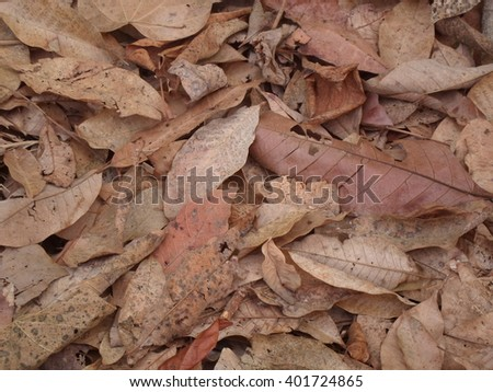 Dry leaf brown sorted overlap.  - stock photo