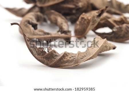 dry leaf closeup on the white background  - stock photo