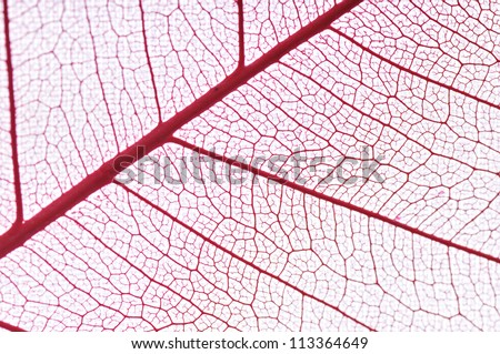 Dry leaf detail texture in front to light - stock photo