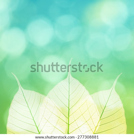 Dry leaf detail texture on green background. - stock photo