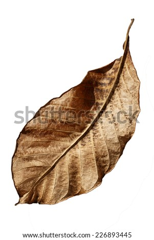 dry leaf isolated on the white with clipping path - stock photo