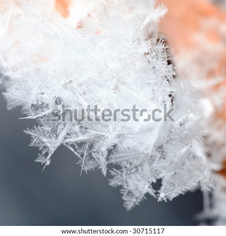 dry leaf of oak covered by a hoarfrost