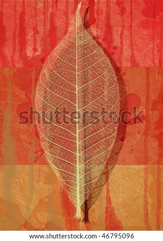 dry leaf on a coloured background