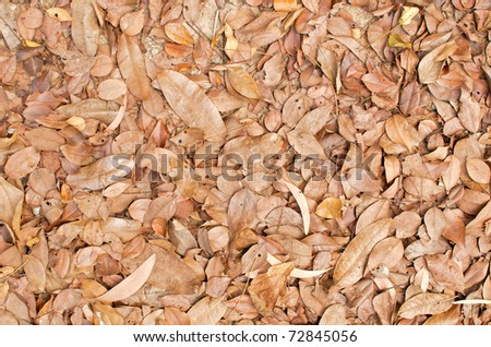 dry leaf on ground - stock photo