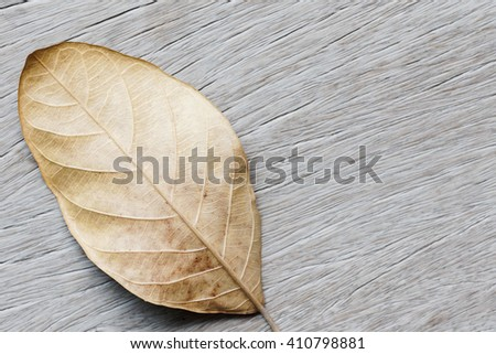 Dry leaf on old wooden background - stock photo