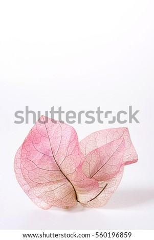 Dry leaf plum Bougainvillea placed English letter N