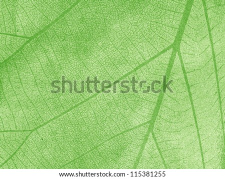 Dry leaf textured on grunge paper background - stock photo