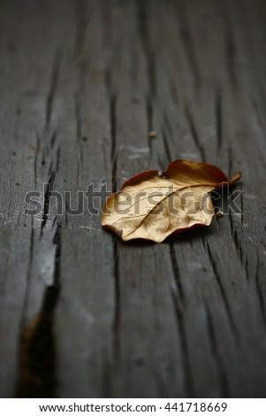 dry leafs closeup - stock photo