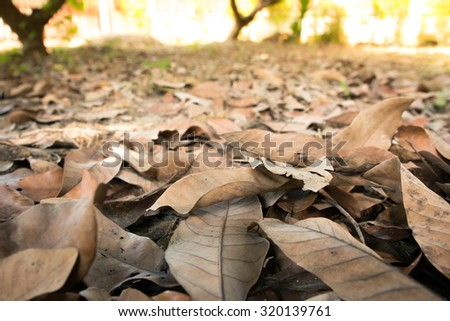 dry leave - stock photo