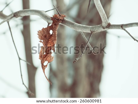 Dry leave on forest tree - stock photo