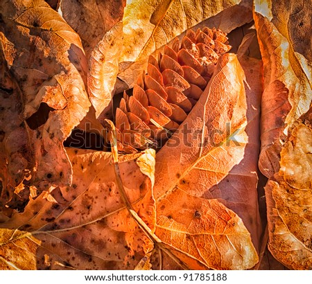 Dry Leaves and Pine Cone closeup as a sign of season change - stock photo