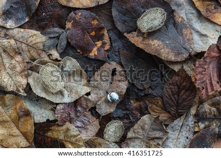 dry leaves and shell as a background
