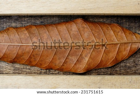 dry leaves and wooden sticks on old wooden background - stock photo