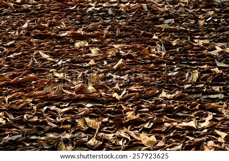 dry leaves background - stock photo