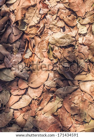 Dry leaves background texture